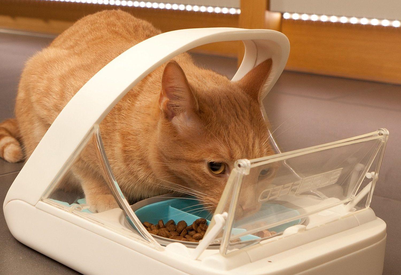 Futterautomat für Katzen mit Chiperkennung