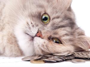 Katzen Chippen Kosten / Preis