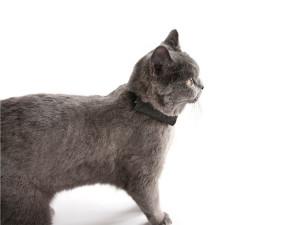 Wo-ist-Lilly GPS für Katzen