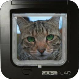 katzen chippen darum solltest du deine katze mit einem mikrochip markieren katzen chippen. Black Bedroom Furniture Sets. Home Design Ideas